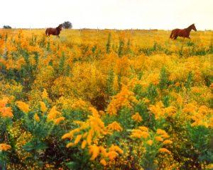 (Horses 1973)