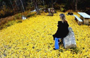 (Picnic Reminiscing,  October 2005)