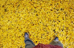(Self Portrait with Leaves, Northern New Mexico)