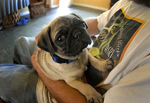 Sluggo The Wonder Pug  — At Home —  March 25, 2006