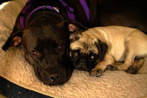 (Bella and Sluggo)