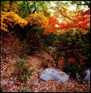 (The Blue Rock.  Lost Maples State Park, Texas  October, 1980)